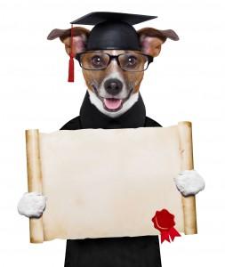 22286067_lgraduate dog