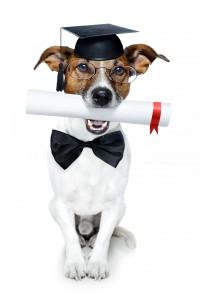 12215397_lgraduate dog2